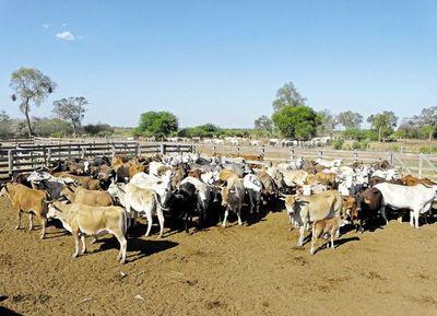 El bajo precio y la sequía apremian a los ganaderos