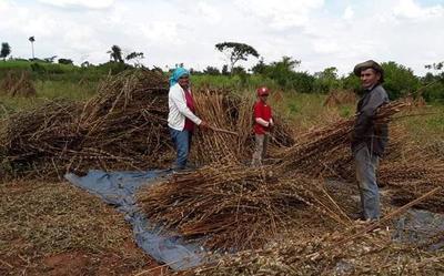 MAG brinda asistencia técnica a productores de varios distritos del país
