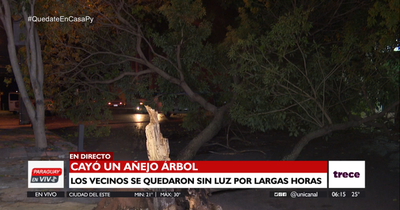 Caída de frondoso árbol dejó sin luz a barrio de Asunción
