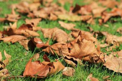El verano se despide y amaneceres frescos anuncian el inicio del otoño