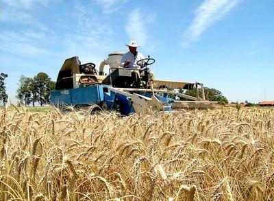 Exportación de trigo al Brasil registró fuerte caída del 45%