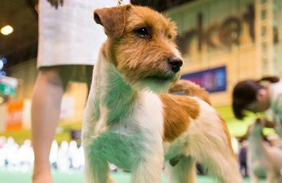 Los fans de los perros desafían al coronavirus