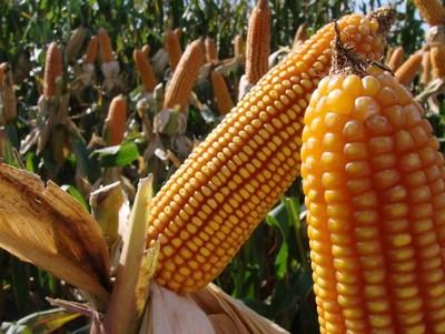 BID apoyará con créditos la productividad agropecuaria
