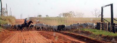 Frigoríficos condicionan libre comercio de ganado en pie