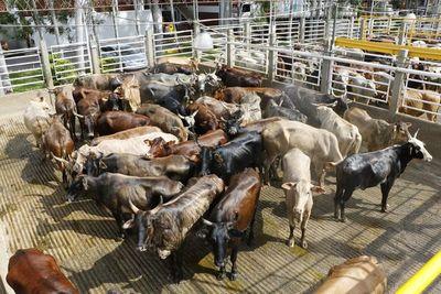 Suspenden temporalmente la exportación de carne a la UE