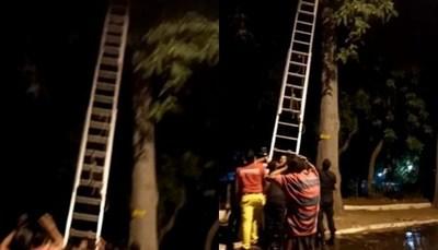 ¡Insólito! Mujer quedó atrapada en lo alto de un árbol
