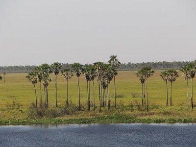 El Pantanal reverdece con primeras lluvias de otoño tras incendios