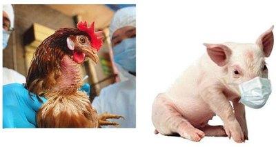 Sorprendente: Virus de animales que saltaron a los humanos