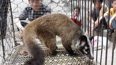 En China reabren mercados con la venta de murciélagos y otros animales exóticosEn China reabren mercados con la venta de murciélagos y otros animales exóticos · Radio Monumental 1080 AM