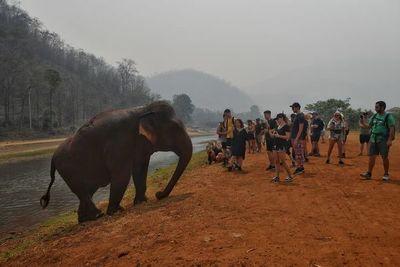 Elefantes pasan hambre en Tailandia por pandemia