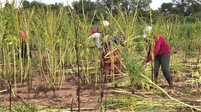 Lluvia se hizo esperar: el clima no acompañó el esfuerzo de productores indígenas
