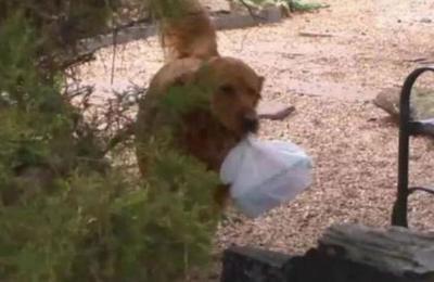 Mujer entrena a su perro para que le lleve las compras a una vecina aislada por el coronavirus