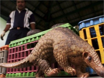 Se lanza campaña  contra mercados de animales vivos