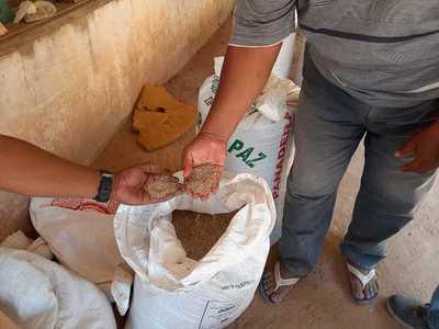MAG entregará insumos para asegurar autoconsumo de 150.000 familias agrícolas