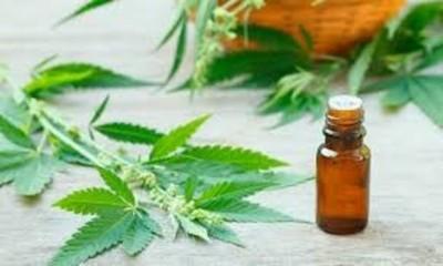 Consideran que el cultivo de cannabis sería una salida ante la crisis económica por el Covid-19