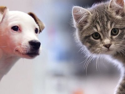 Ciudad china prohíbe comer perros y gatos tras crisis del Covid-19