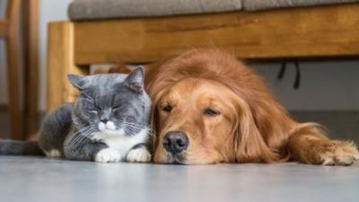 COVID-19: Los animales de compañía no contagian la enfermedad, sostiene veterinario