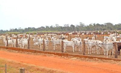» Afirman que sector agropecuario es clave para recuperación económica