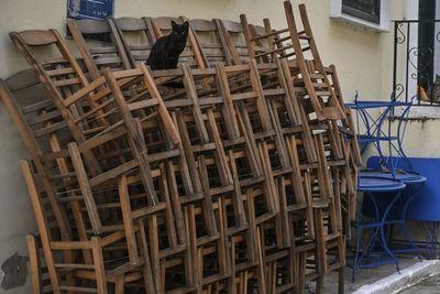 Perros y gatos callejeros, los olvidados de la pandemia