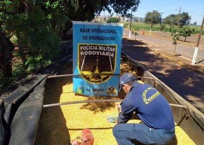 Caen en Brasil 5.500 kilos de marihuana paraguaya