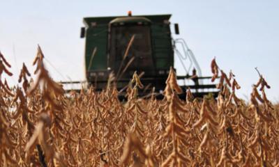 » Zafra de soja 2019-2020 presenta resultados positivos