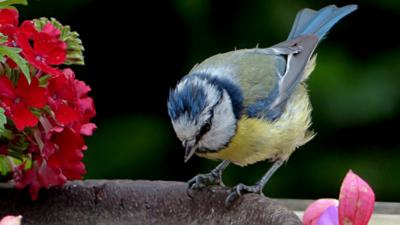 Guyra Paraguay lanza ciclo de charlas virtuales en conmemoración del Conteo Mundial de Aves