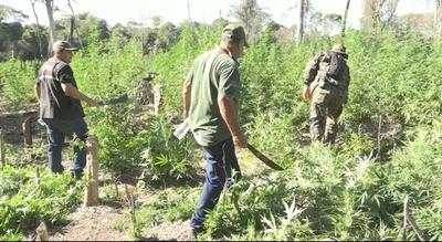 Destruyen plantaciones de marihuana en Parque Nacional