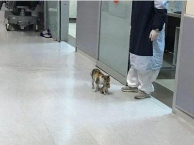 Gata lleva a su cría al hospital en busca de ayuda