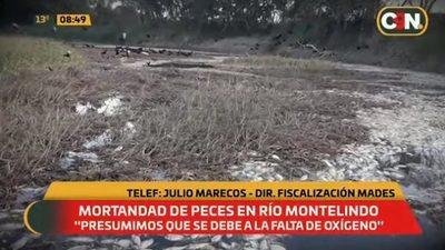 "Peces mueren por ""descomposición de vegetales"", afirman"