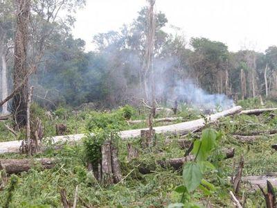 Destruyen 96.000 kilos de marihuana en el Parque San Luis