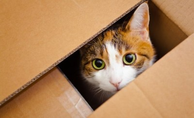 Los gatos son susceptibles al coronavirus, afirma la OMS