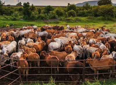 Sector agropecuario debe estar preparado para próximos escenarios complicados