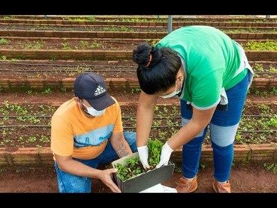 CON ENTREGA DE PLANTINES, PROMUEVEN LA HUERTA FAMILIAR EN CAMBYRETÁ
