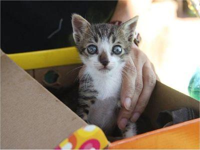 Los gatos son una especie más susceptible al coronavirus