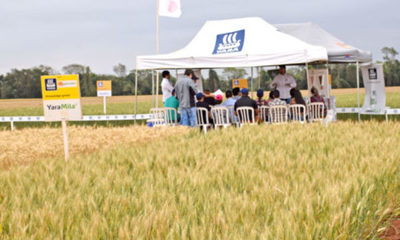 » Propuesta de fertilización para trigo con Agrosystem