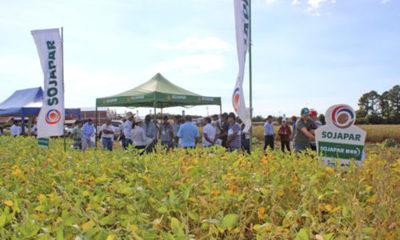 » Genética e insumos en parcelas de la Cooperativa La Paz