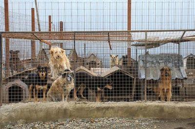 Ciudad argentina se organizó para ayudar a sus protectoras de animales