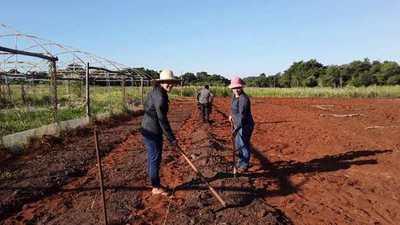 Caaguazú: jóvenes del MCP desarrollan producción de frutillas agroecológicas