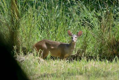 Arrancó la semana de la biodiversidad