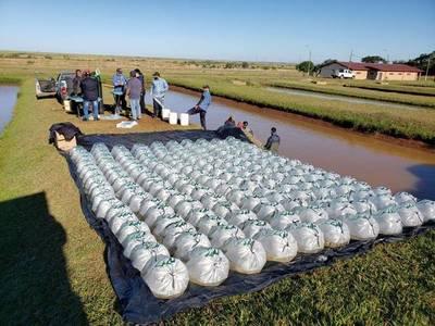 La EBY reinicia entrega de alevines a pequeños productores de Itapúa