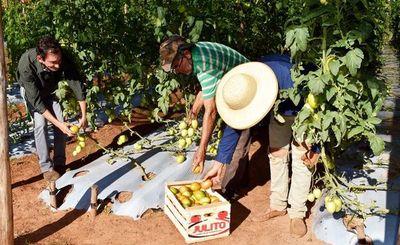 Incentivan la producción hortícola en General Aquino