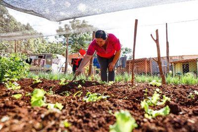 MAG alcanzó a entregar 50.000 huertas familiares a nivel país