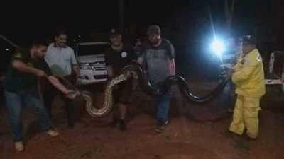 Rescatan a curiyú de casi 200 kilos en San Pedro