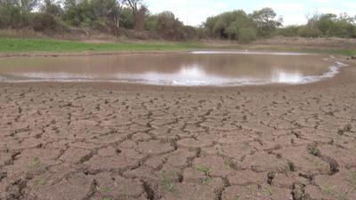 Así se mantiene la comunidad indígena Casuarina pese a la sequía actual