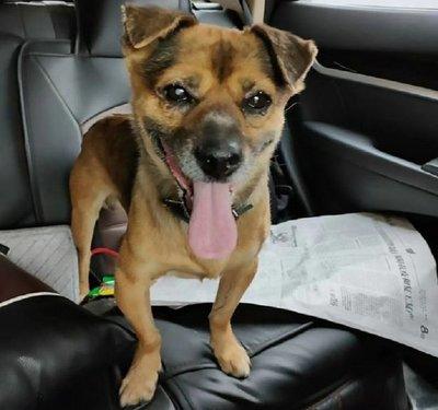 Perro aguardó tres meses en hospital hasta que su dueño murió por covid-19