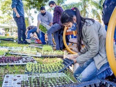Entregan unos 50.000 plantines de hortalizas a familias de Encarnación