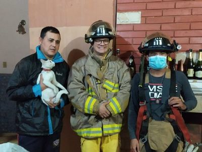 Bomberos rescatan a una gatita que quedó atrapada en un pasillo