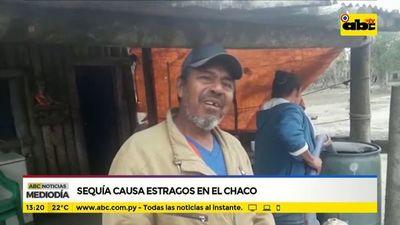 Sequía causa estragos en el Chaco