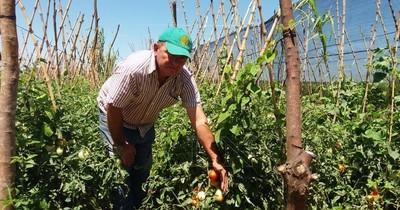 MAG: hay buena expectativa de producción hortícola