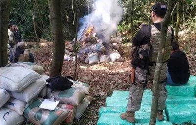 María Auxiliadora : Senad incauta 3 toneladas de marihuana y destruye campamento narco